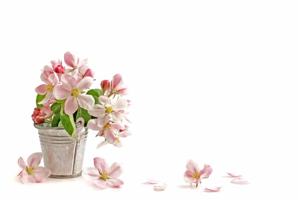 Flower Essences & Remedies - Flowers for Healing