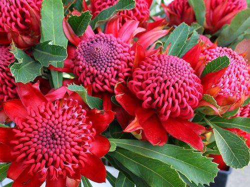 Waratah - Workshops - Flowers for Healing