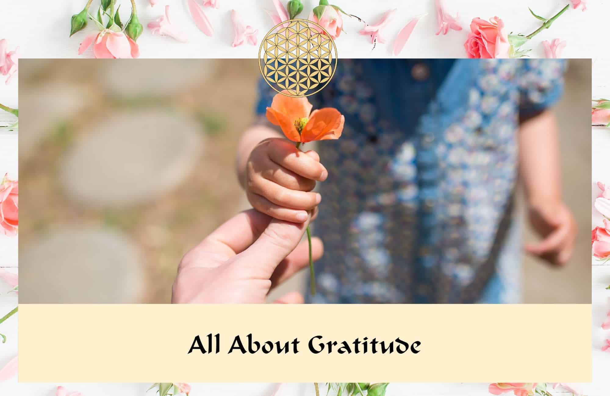 All about gratitude - Flower Essences & Remedies - Flowers for Healing